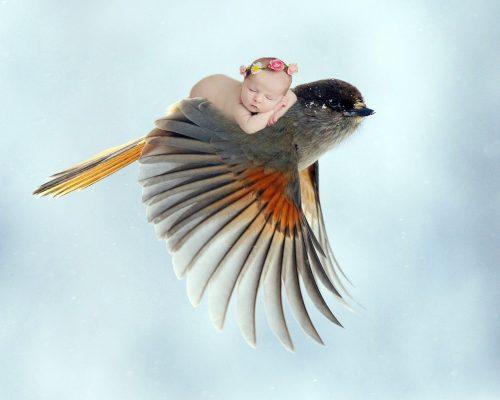 baby-bird piggyback