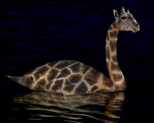 swan-giraffe