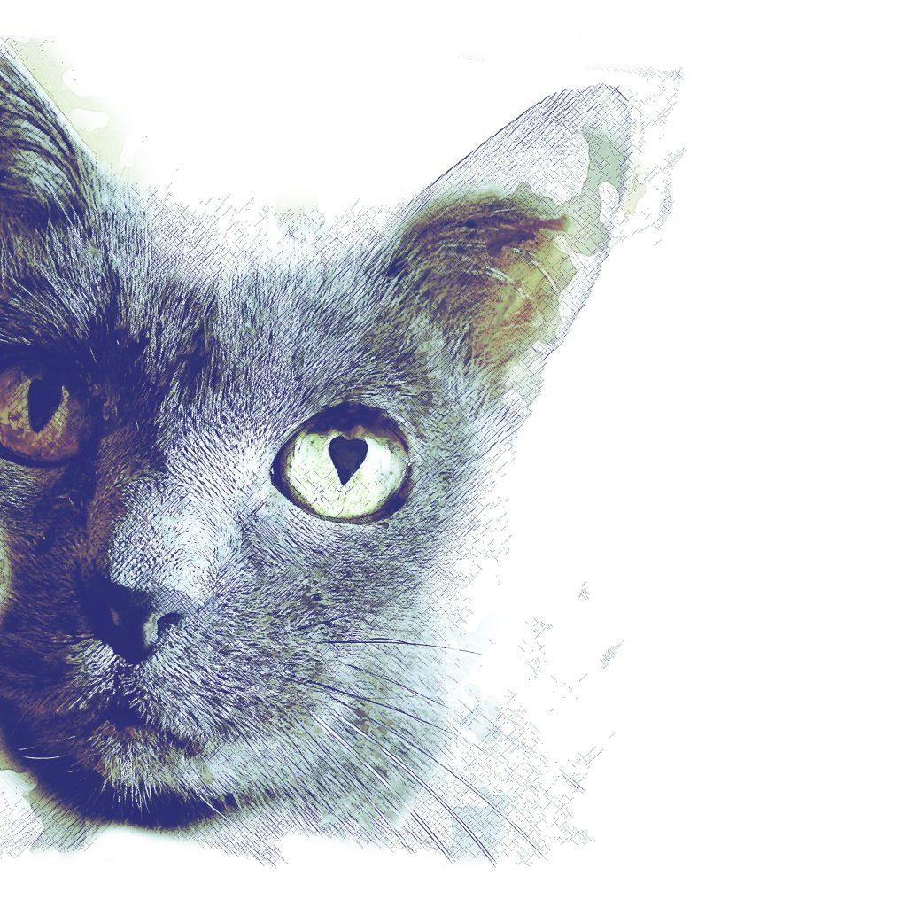 Cat art commission